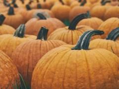 pumpkin-dollar-scent-club