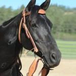 Snaffle Bridle Parelli Natural Horsemanship