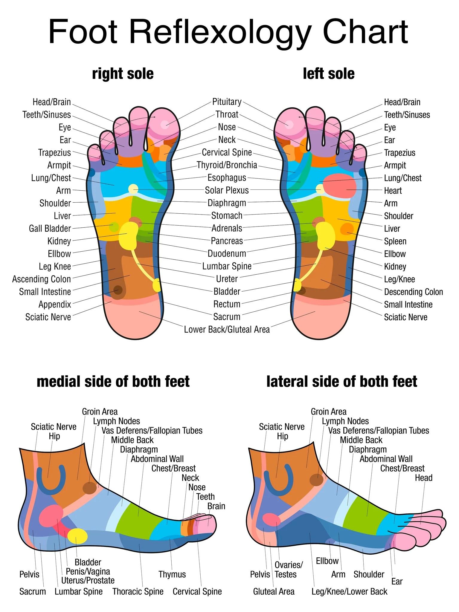 hight resolution of 12 ce advanced foot massage foot reflexology 2 day class 185
