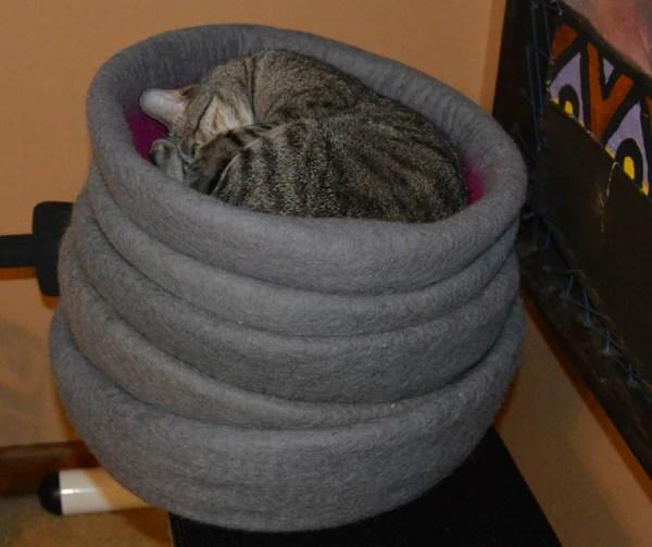 tabby cat sleeping in cat cave