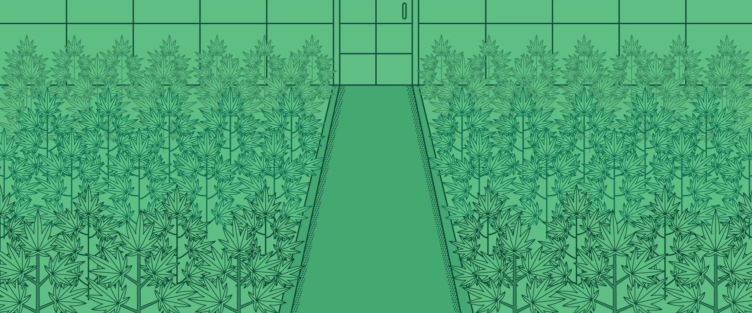 hight resolution of a grow room that your plants will love
