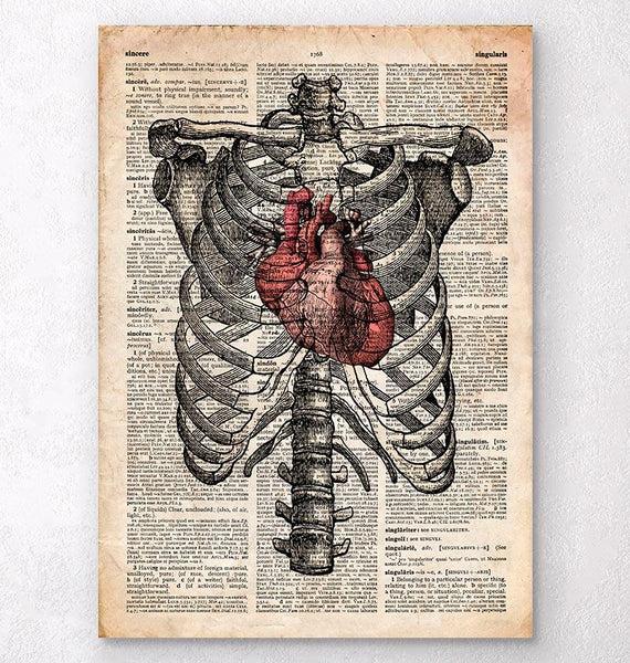 human liver diagram john deere 4440 cab wiring heart and rib cage - anatomy art codex anatomicus