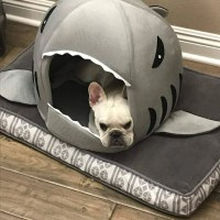 House for frenchie (shark Bed)  frenchie Shop