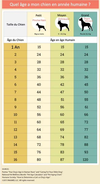 Comment Calculer L'âge D'un Chat : comment, calculer, l'âge, Calculer, L'âge, Chien, Humain, Correspondance, âges