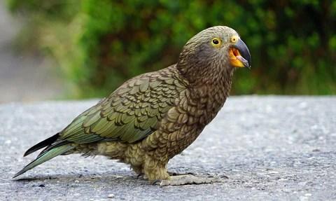 the most intelligent birds