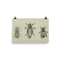 Bumble Bee Diagram Hunter Ceiling Fan With Light Wiring Art Great Installation Of Prime Swarm Vintage Poster Venture Modern Rh Venturemodern Com Ant Life Cycle