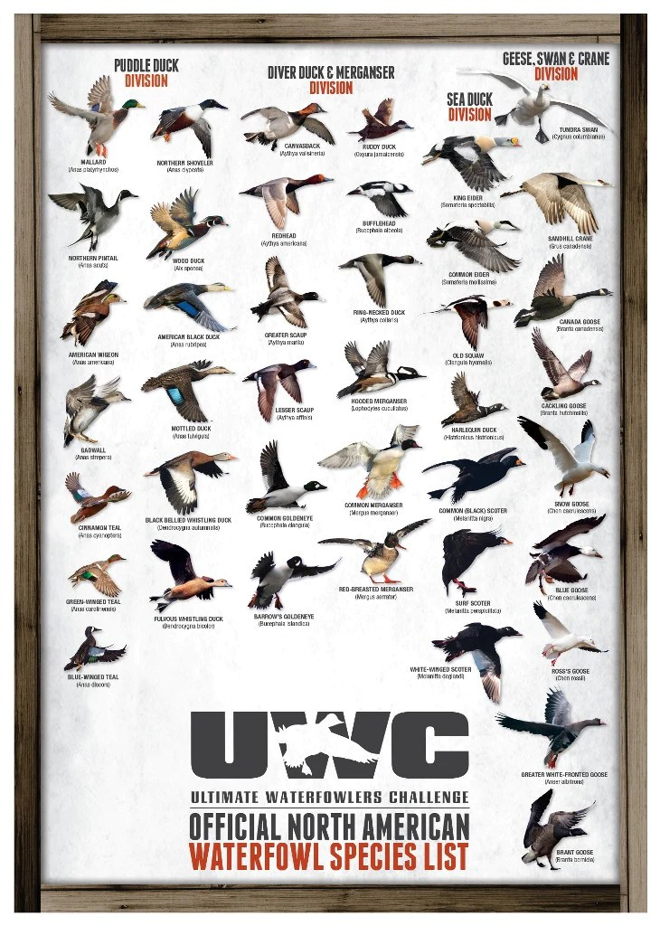 Uwc official north american waterfowl species poster also  ultimate rh shop waterfowlerschallenge