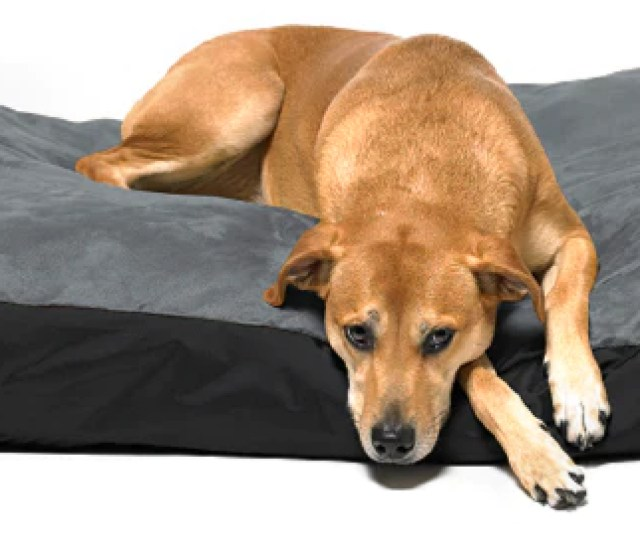 Original Dog Bed For Dogs Of All Sizes