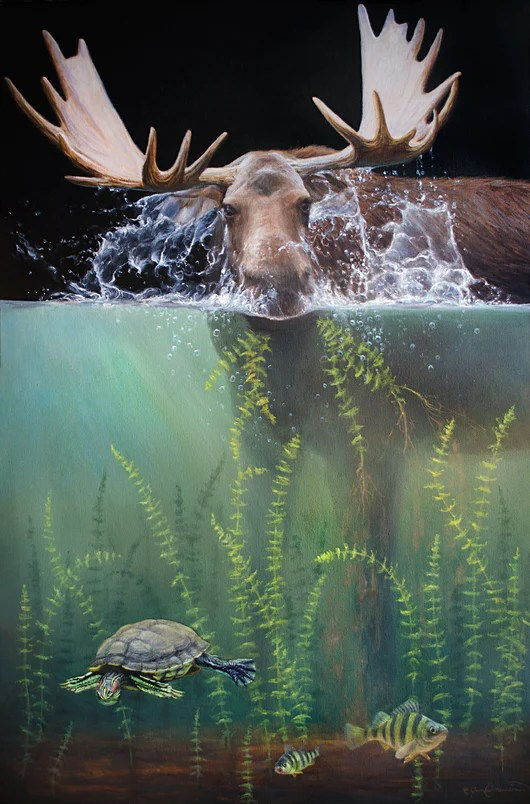 How far can a moose dive?