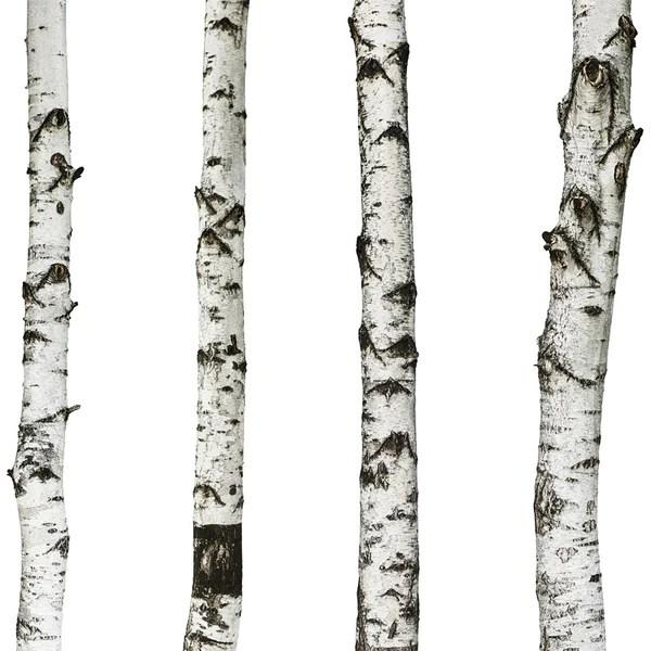 realistic birch trees set