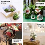 12 Teardrop Hanging Glass Terrarium Hanging Succulent Planter Tableclothsfactory