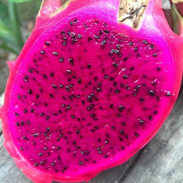 Pink Pitaya Fruit Seeds  Jack Seeds