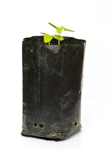 A Grow Bag with Drainage Holes