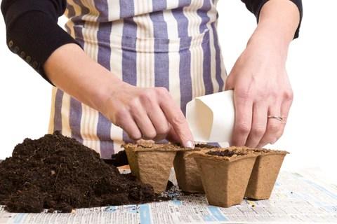 Preparing Biodegradable Bags for Planting