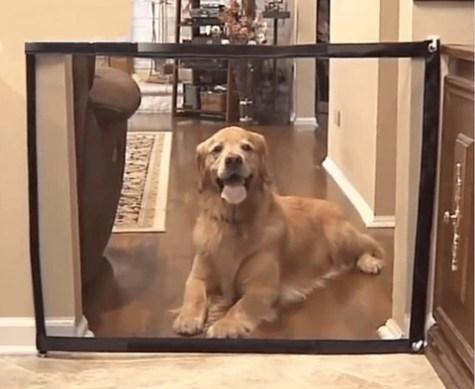 Portable Dog Door Guard