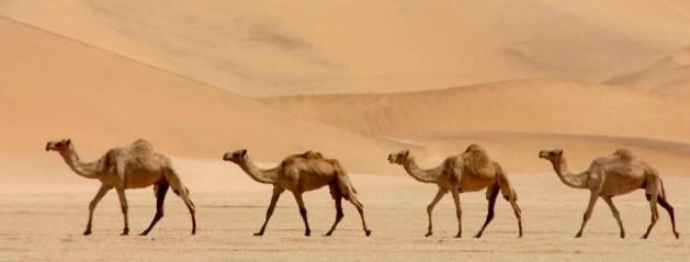 Image result for camel skin