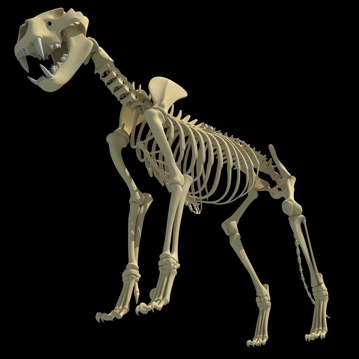 3d Models Animal Skeletons - Year of Clean Water