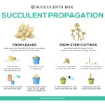Tips On Succulent Propagation From Leaves And Cuttings Succulents Box