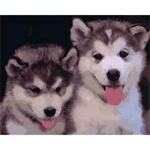 two baby huskies
