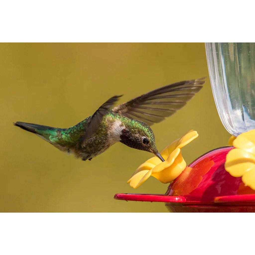 Perky Pet 136TFN Top Fill Hummingbird Feeder With Free