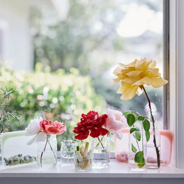 Per i fiori recisi più alti, invece, è preferibile un vaso più pesante a forma di v che non si rovesci e per una scelta stilistica di forte impatto, prova a. Veggies You Can Regrow From Scraps Stasher Bag