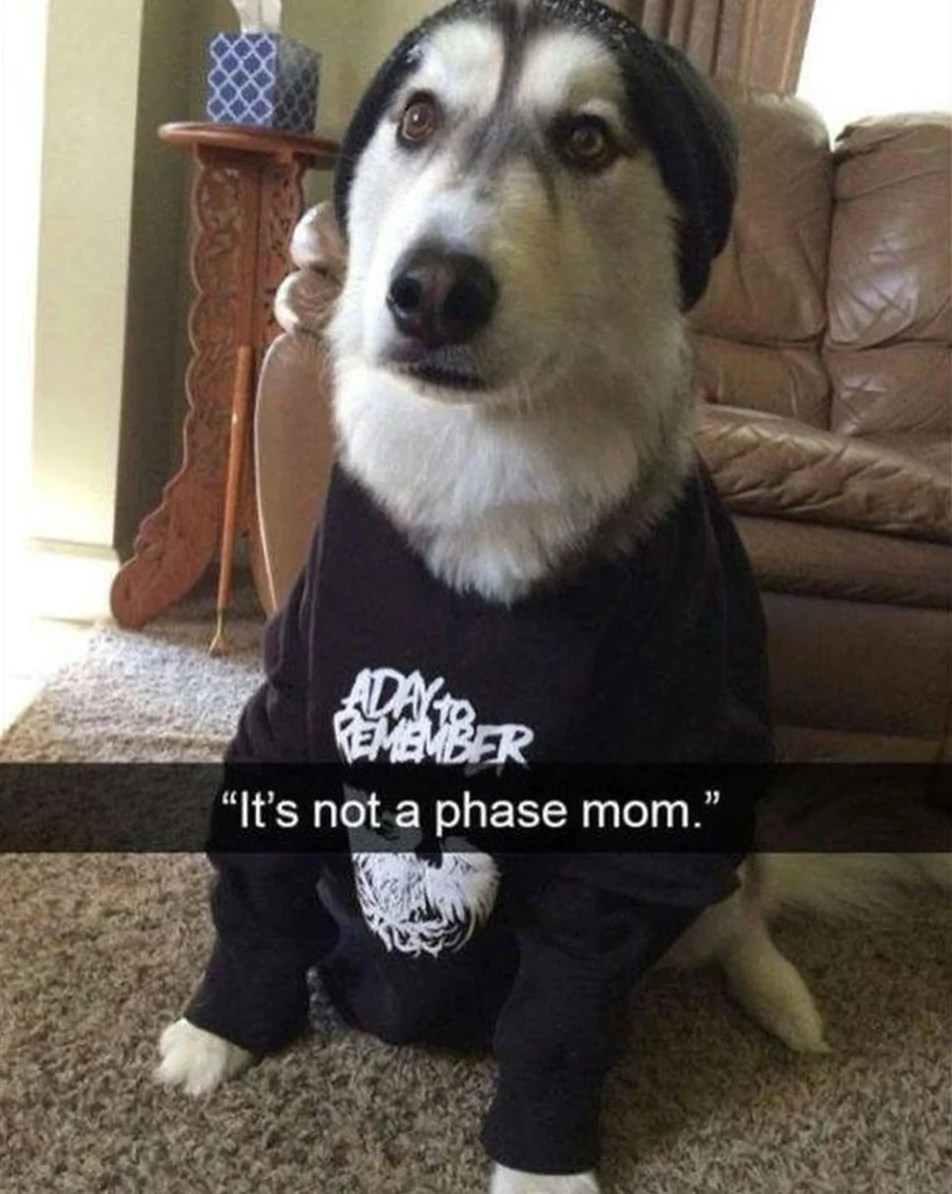 Dog With Hat Meme : Hilarious, Memes, Wearing, Threads