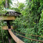 10 Amazing Tree Houses You Ll Want To Call Home Tentree