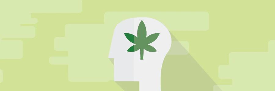 Marijuana Effects On The Body