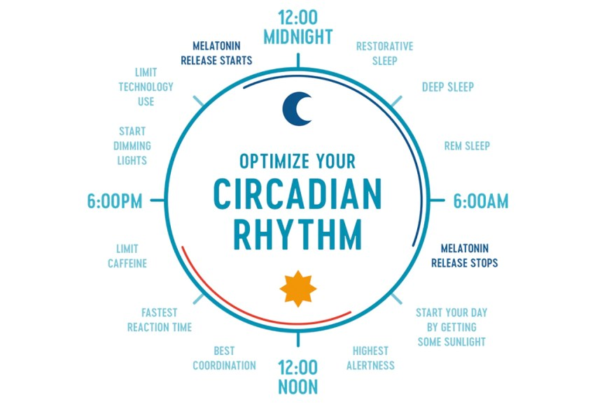 Image result for Circadian Rhythm