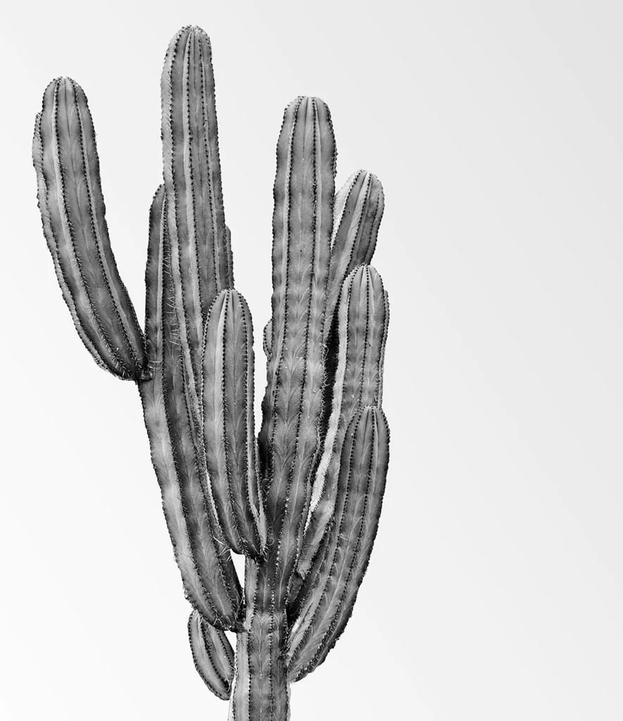 minimalist black and white