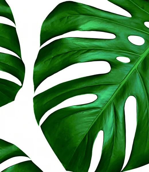 Kids Animal Wallpaper Tropical Monstera Leaf Print Little Ink Empire