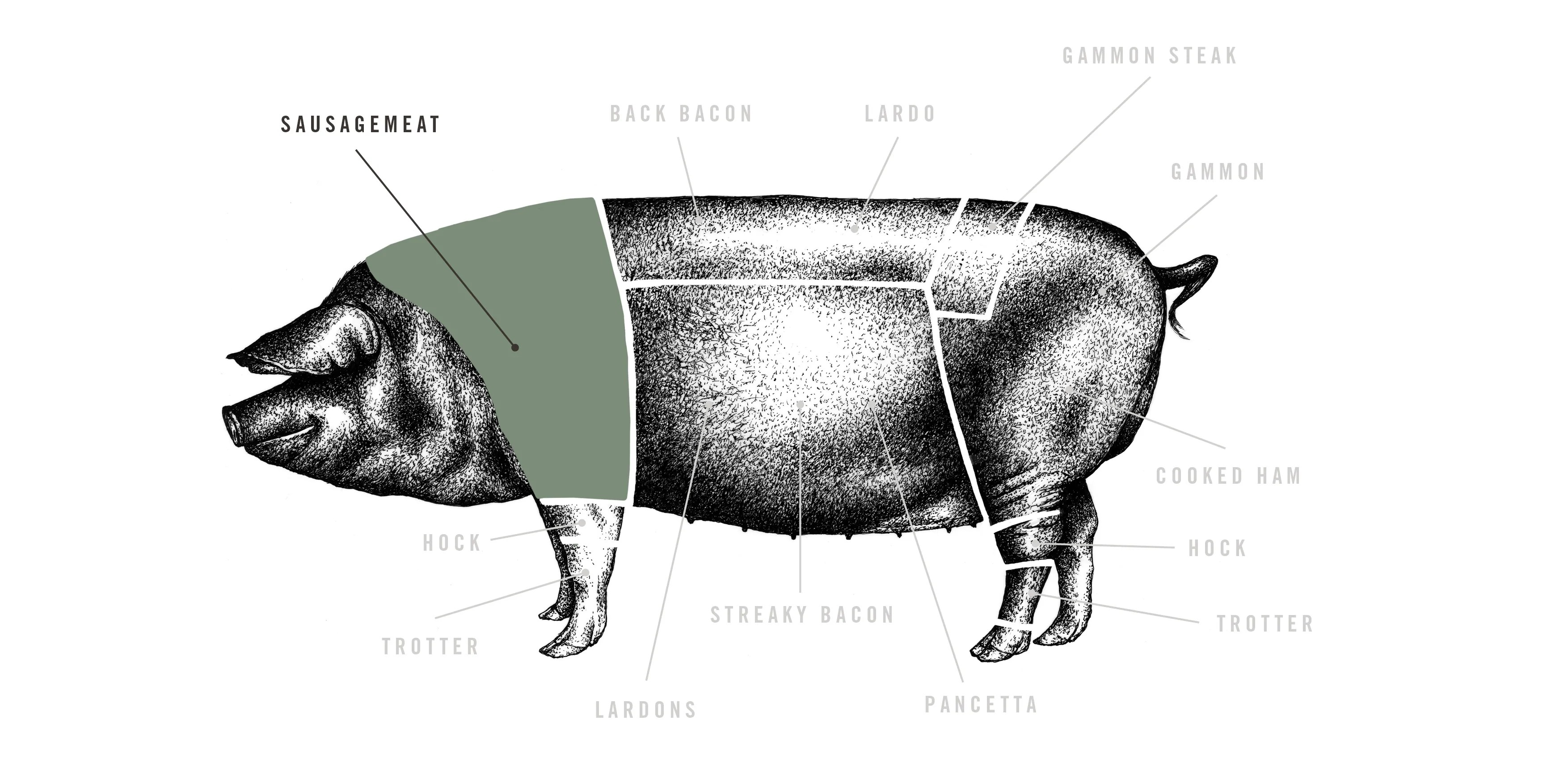 hight resolution of natural black pudding sausages meat cuts diagram