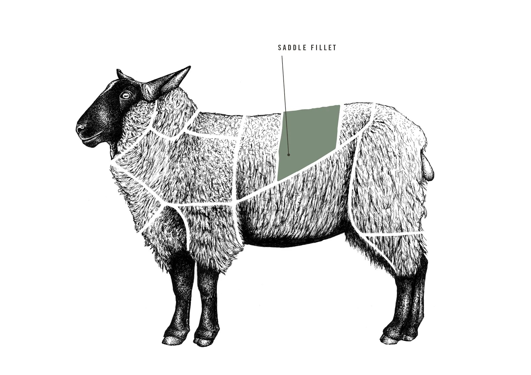hight resolution of saddle fillet of lamb meat cuts diagram