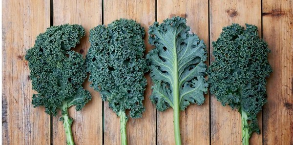 Four Kale Leaves