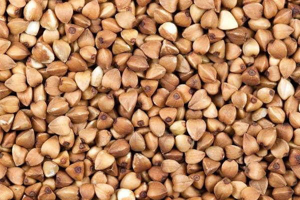 Vegan Plant Protein