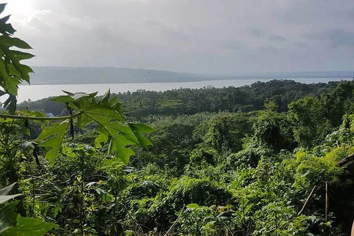 Vanuatu - Tamanu Australia