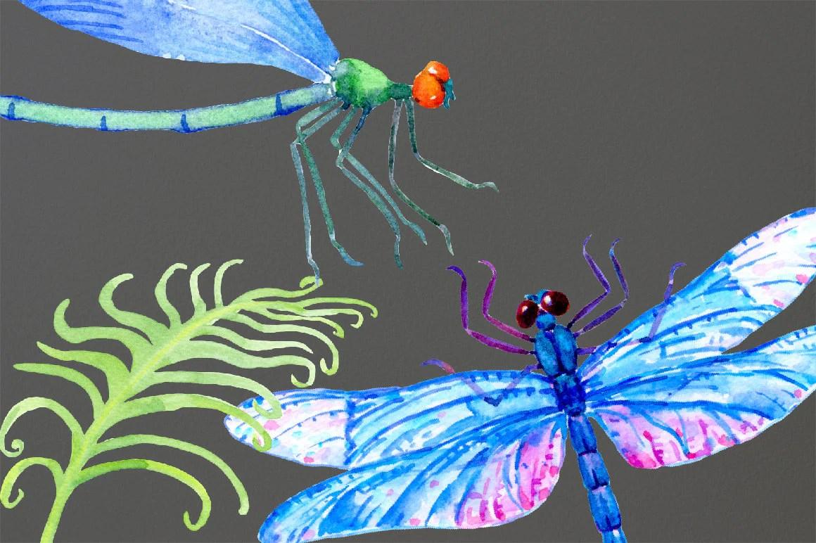 dragonfly clip art watercolor