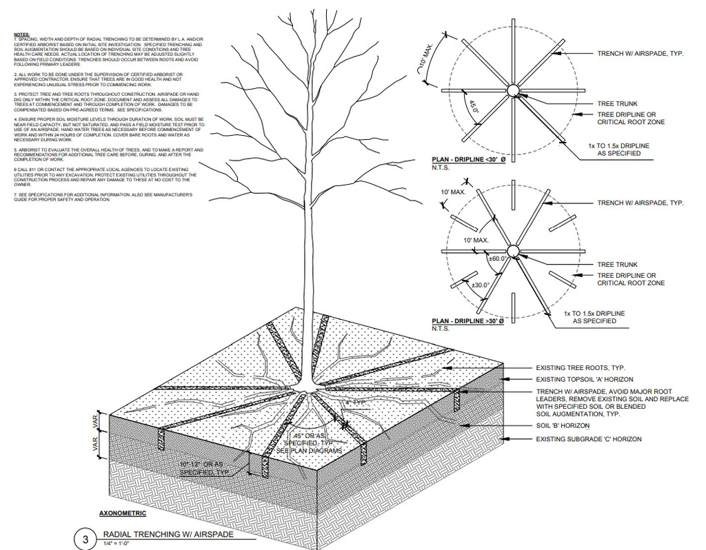medium resolution of root tree trunk diagram