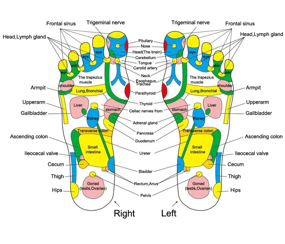 hight resolution of acupuncture cobblestone foot reflexology acupuncture cobblestone foot reflexology