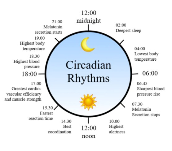 「circadian rhythm」の画像検索結果