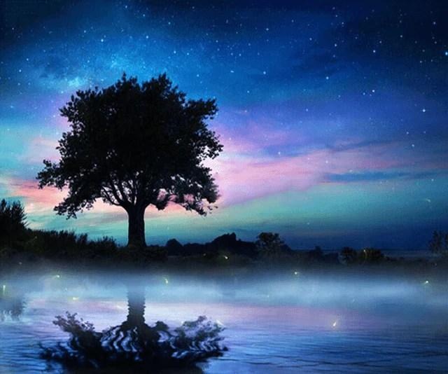 Night Sky Tree  5D Diamond Painting Kits  OLOEE