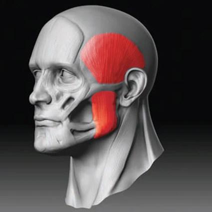 Muscleur de Machoire Muscles ciblés