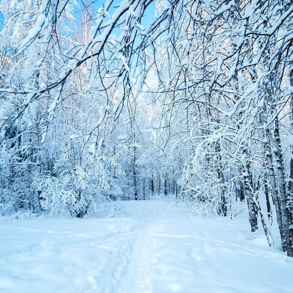 snow-covered forest winter landscape