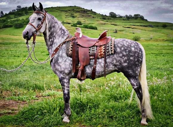 Western Saddle Diagram Horse And Saddle Diagrams Horse Ntk