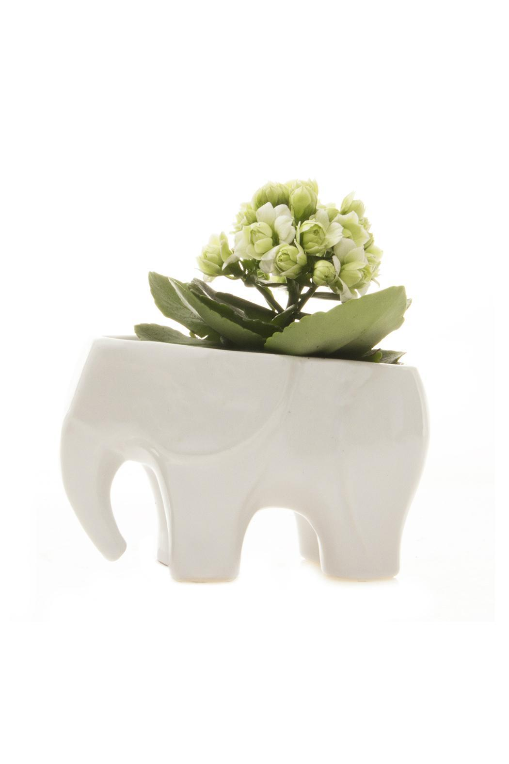 Chive Elephant Vase White From Long Island By Clarke's
