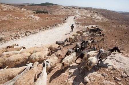 The Shepherd Society Helps Struggling Palestinian Families in the West Bank and Gaza