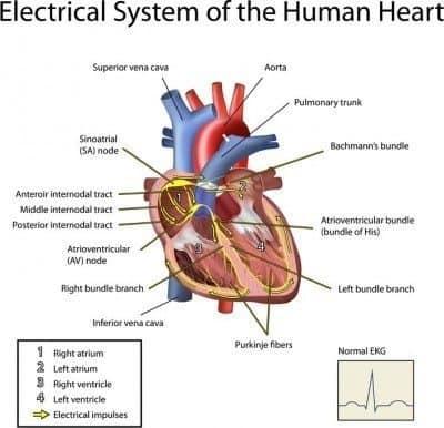 heart palpitations irregular heartbeat