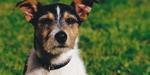Obdachlose Und Ihre Hunde Ein Thema Ohne Eine Gute Lobby