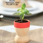 Mini Succulent Planters Use As Favors Or Give As Gifts