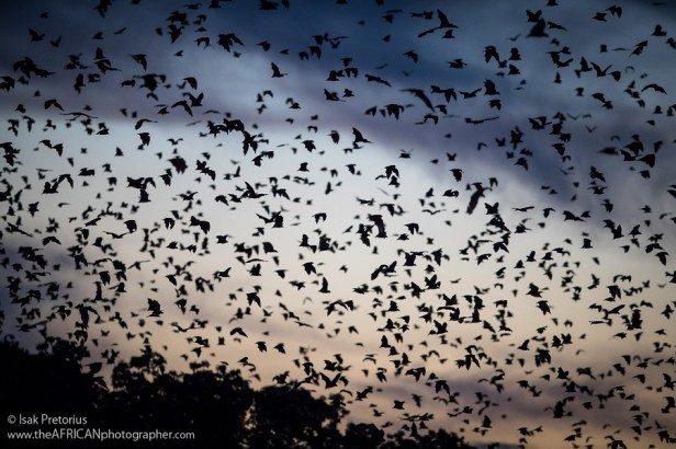 Image result for The Biggest Mammal Migration Is Airborne